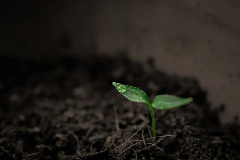Жительница района Сокол собрала коллекцию образцов съедобной почвы